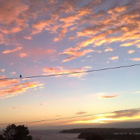 Sunrise bird on wire